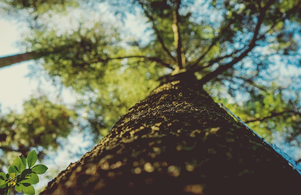 Kiszámolták a nagyvárosokban lévő fák hasznának értékét