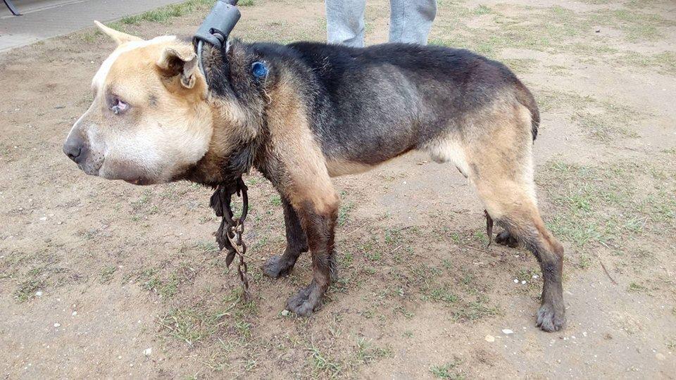 Letöltendő fogházra ítélték Fülöp kutya kegyetlen kínzóit