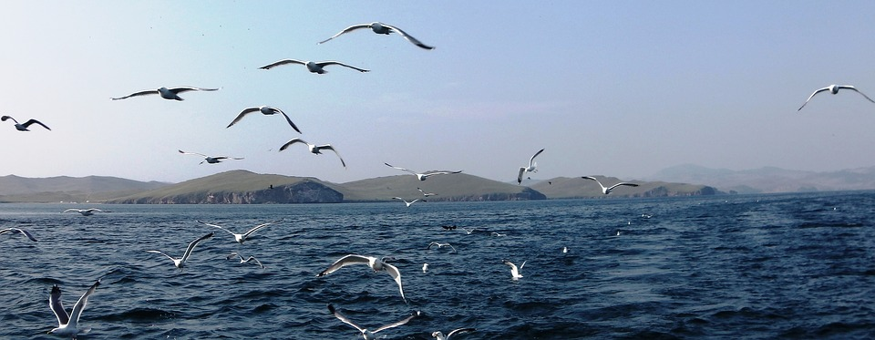 Hepatitisz és bélgyulladás végzett a Bajkál-tó fókáival
