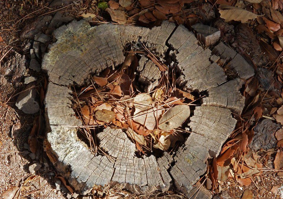 Rekordmennyiségű fa veszett oda világszerte 2016-ban