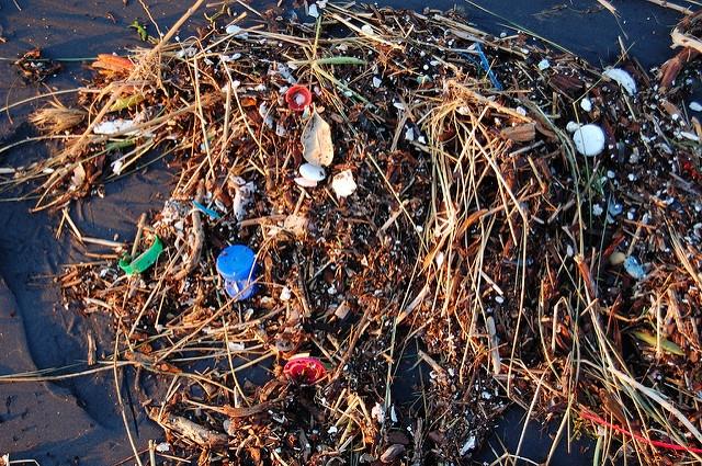 Műanyagszennyezést tartalmaznak a kagylók az Északi-sarkvidéktől egészen Kínáig