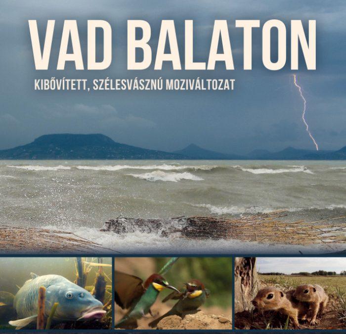 Jövő héttől vetítik a magyar mozik a Vad Balaton című természetfilmet