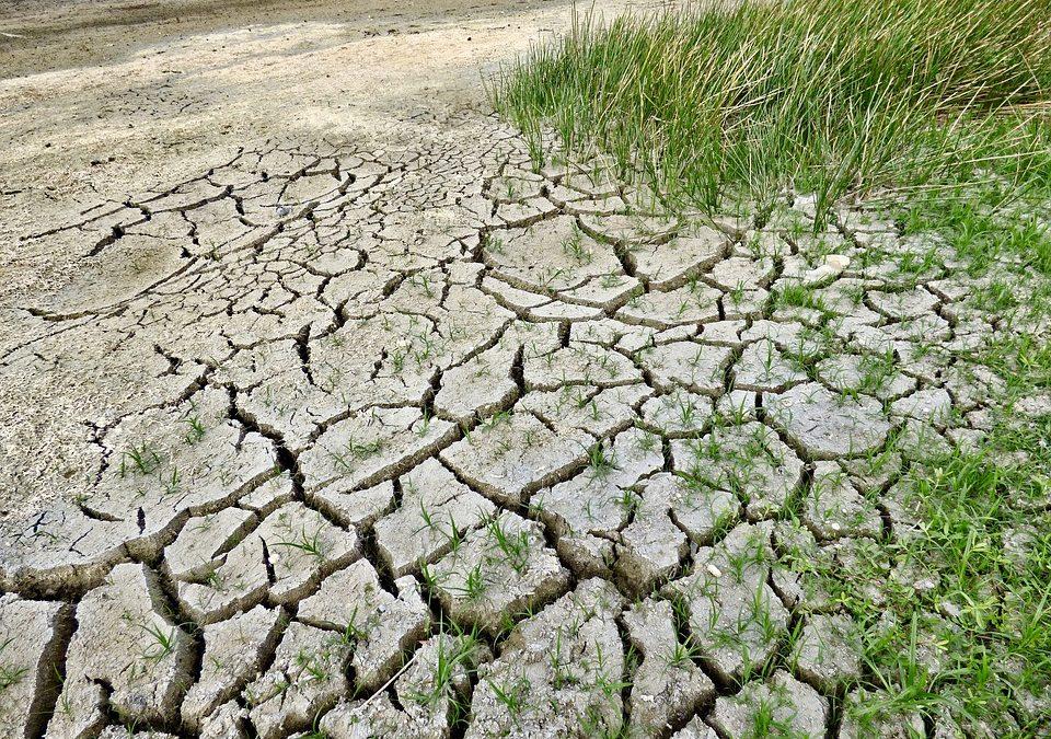 Megmentené a fajok többségét, ha a globális felmelegedés 1,5 Celsius-fokra korlátozódna