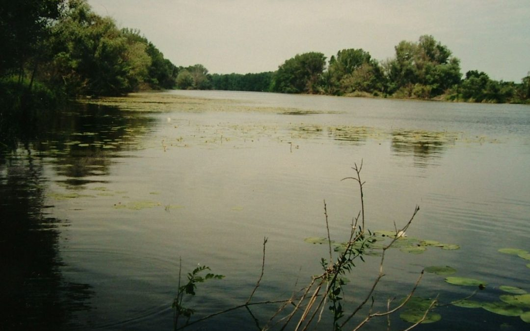 Cianobaktérium miatt tilos a fürdés a Holt-Tiszánál