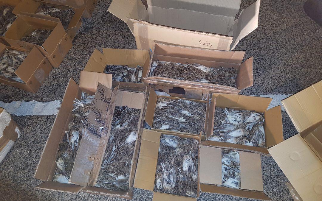 Több mint 2500 madár teteme került elő egy autóból az M7-esen