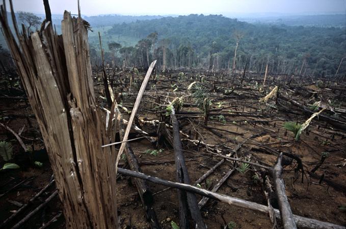 Egymillió focipályányi erdőt vágtak ki Brazíliában tavaly