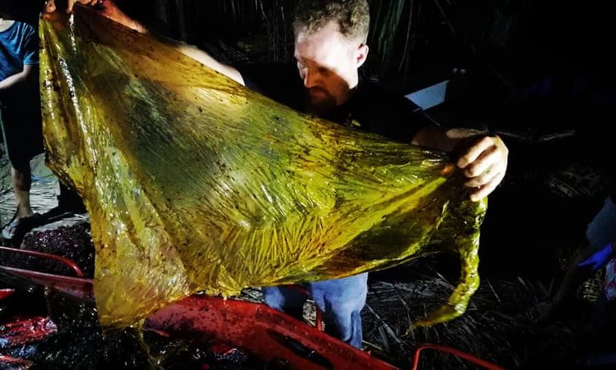 Negyven kilogramm műanyag zacskót találtak egy bálna gyomrában