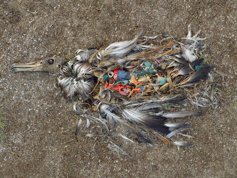 A léggömb a legveszélyesebb tengeri hulladék a tengeri madarakra nézve