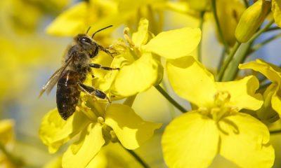 Megyei méhészegyesületi elnök: milliárdos kárt okozhat a mezőgazdaságnak a méhek számának csökkenése