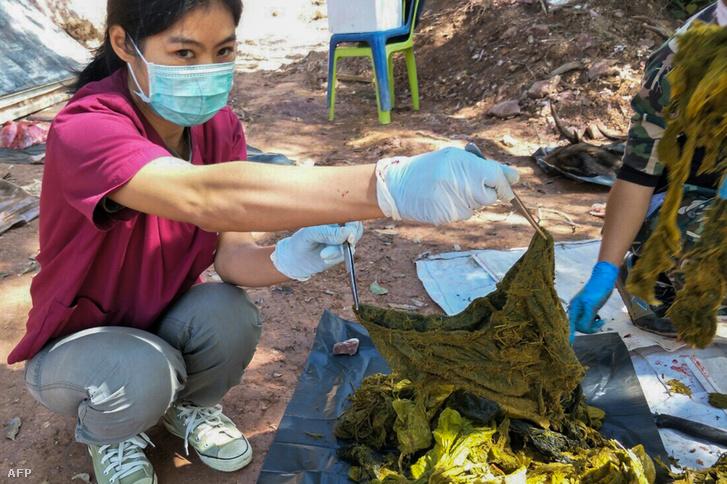 Hét kilogramm műanyagot találtak egy elhullott szarvas gyomrában Thaiföldön